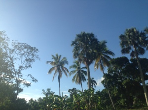 These palms are in the North-West, not the Central Plateau.